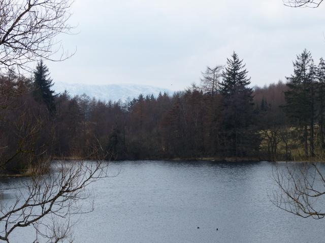 Moss Eccles Tarn, Beatrix Potter and William Heelis' favourite place