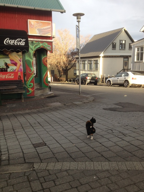 Apparently Reykjavik is overrun by cats, I saw about 4.