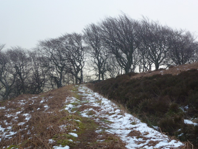 Near Tenter wood
