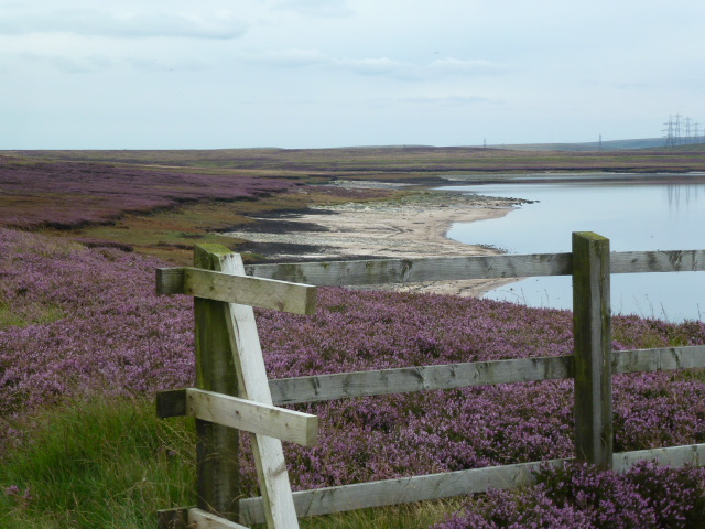 The blooming heather